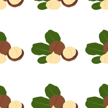 Macadamia nut. Cosmetic and medical plant. Vector seamless pattern.  イラスト・ベクター素材
