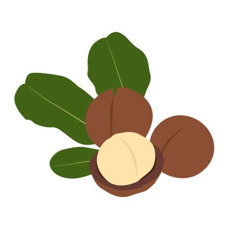 Macadamia nut in shell and peeled. Vector Illustration. Illusztráció
