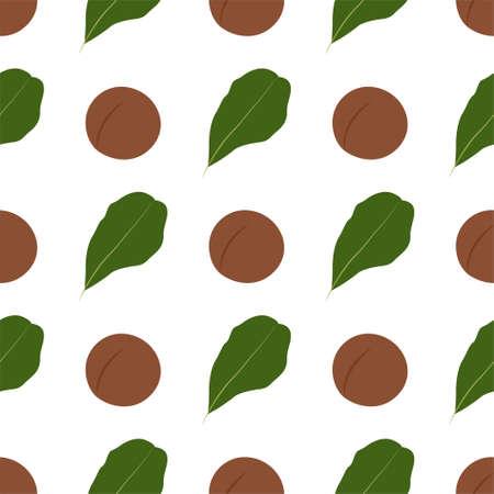 Macadamia nut. Cosmetic and medical plant. Vector seamless pattern. Illusztráció