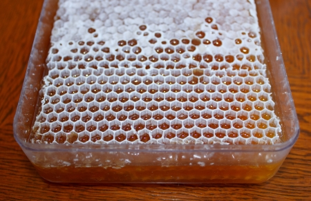 Plasic box with honey in white honeycomb on wooden table photo
