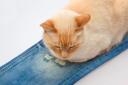 semi dress: light ginger cat lying on blue jeans