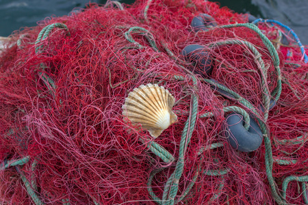 floats: purple fishing net with floats and shell on close-up