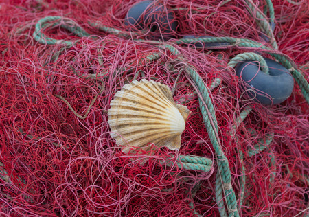 floats: red and purple fishing net with floats and shell on close-up