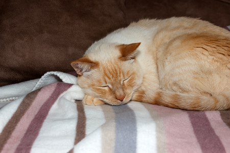 paw smart: cat sleeping on soft striped plaid on the sofa Stock Photo