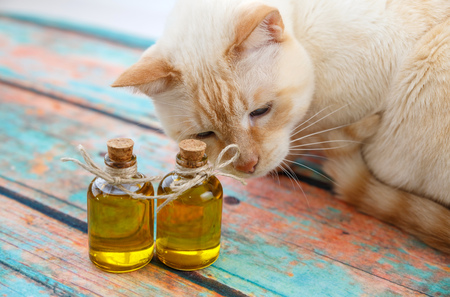 light red cat sniffs the olive oil in bottles on a background imitating an old tree