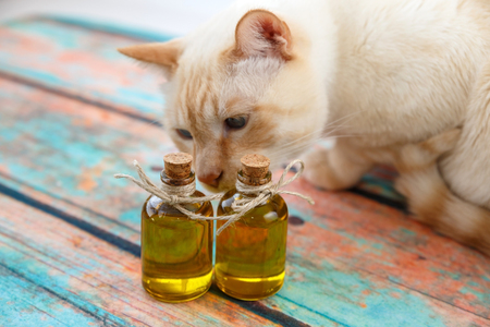 light red cat sniffs the olive oil in bottles on a background imitating an old tree.photo with shallow depth of field