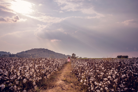 Beautiful little girl with long hair and in pink dress standing in cotton field with arms outstretched Reklamní fotografie