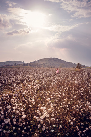 Beautiful little girl with long hair and in pink dress standing in cotton field with arms outstretched Banque d'images