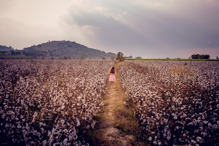 Beautiful little girl with long hair and in pink dress girl running in cotton field.