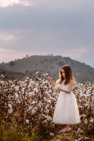 Beautiful little girl with long hair and in white dress in cotton field.