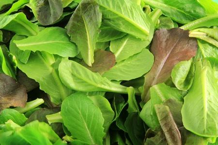 romaine: Baby romaine salad background