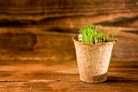 Potted seedlings growing in biodegradable peat moss pot on wooden background photo