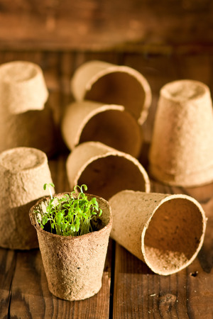 Potted seedlings growing in biodegradable peat moss pots on wooden background photo