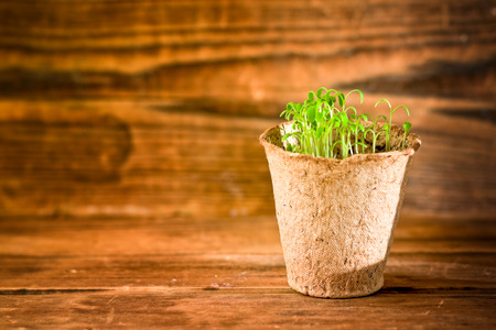 biodegradable: Potted seedlings growing in biodegradable peat moss pot Stock Photo