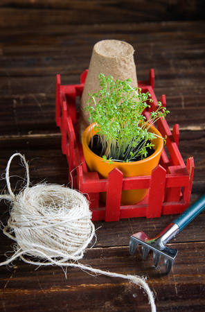 Peat pots, rough thread, rake and green sprouts in red box. Landing of seedling