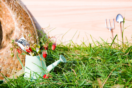 Watering can, wild strawberry, straw hat and tools in garden Stock Photo