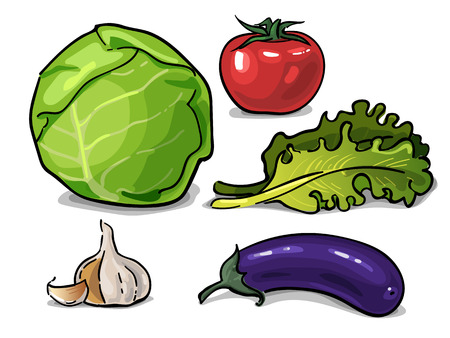 leaf lettuce: Cabbage, eggplant, lettuce, tomato and garlic vegetables drawn vector graphic Illustration
