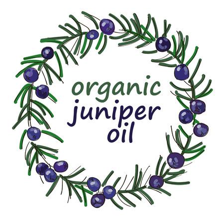 enebro: Juniper ramita corona de color pintado para las etiquetas, embalaje y diseño
