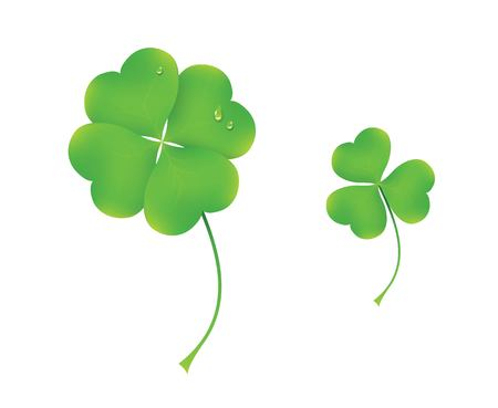 Vector illustration of  four and three realistic clovers isolated on white background. St Patricks day symbols.