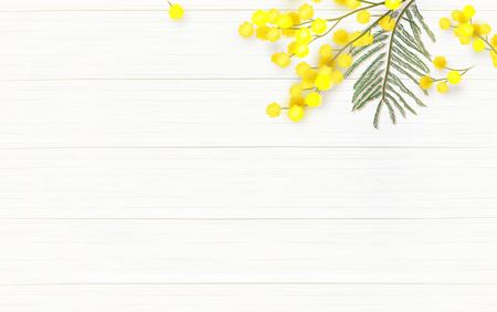Mimosa flowers on white wooden background. Vector illustration