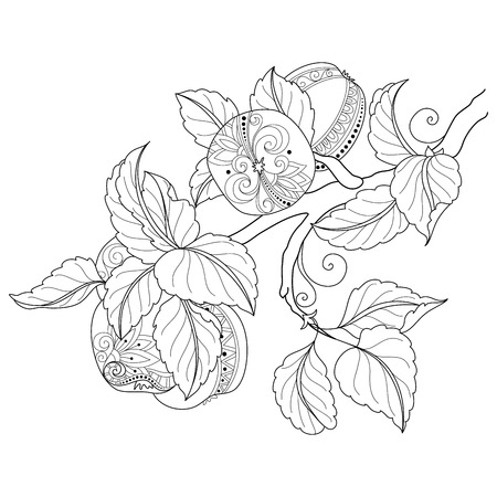 Vector Monochrome Fruit Background. Hand Drawn Decorative Branch of Apple Tree