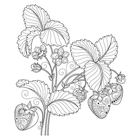 monochrome: Vector Monochrome Fruit Background. Hand Drawn Decorative Strawberry