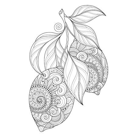 Vector blanco y negro adornado rama de contorno con los limones y las hojas decorativas. Extraer las manos Citrus decorativo Ilustración de vector