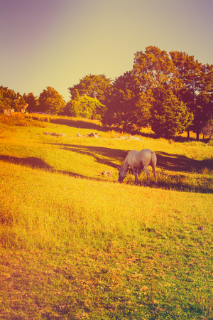 Vintage photo of a grey horse grazing in a meadow on a green slope