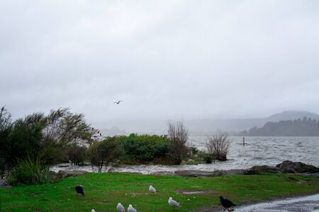 Rain and low clouds over lake Rotorua. A seagull struggles against strong wind. Rotorua, New Zealand Banco de Imagens - 130815102
