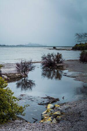 Rainy day at lake Rotorua. Coastline shrubbery over rocks. Rotorua, New Zealand. Toned image Stock Photo