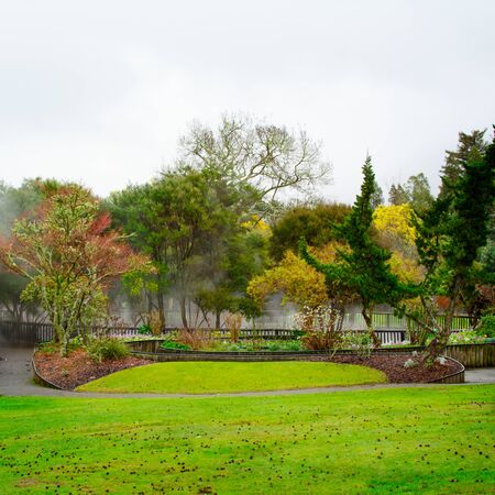 Rainy winter day at Kuirau Park. Steam is rising from natural hot pools hidden behind colourful trees Banco de Imagens