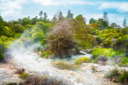 Narrow stream running through steaming geothermal zone towards the woods. Rotorua, New Zealand