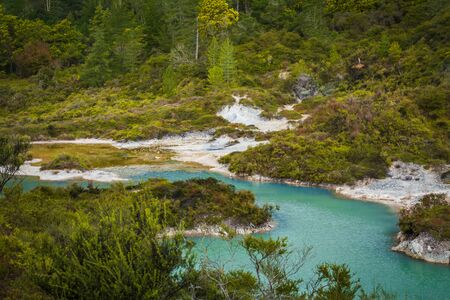 Cyan waters of geothermal lake surrounded by low trees and shrubbery. North Island, New Zealand