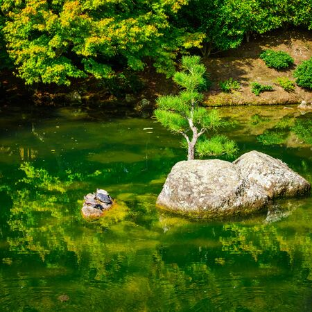 Turtle family sunbathing on a rock island amid a Zen lake in a Japanese garden. Selective focus