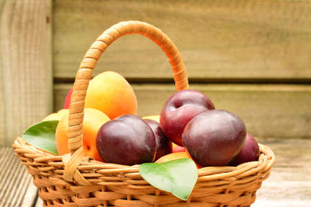 Concept of harvest in fruit orchard. A wicker basket full of fresh plums and apricots over wooden background. Selective focus Stockfoto