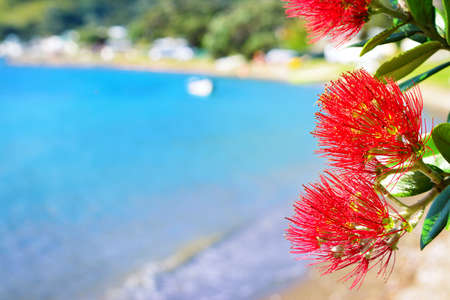 Red blossom of Pohutukawa tree against picturesque tranquil bay water Zdjęcie Seryjne