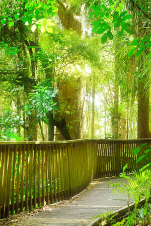 Winding wooden footpath going through native New Zealand forest.
