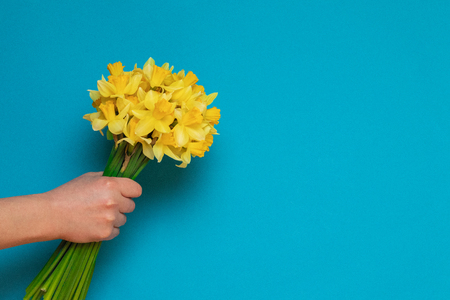 Bouquet of fresh yellow daffodils in female hands on a blue background with space for text