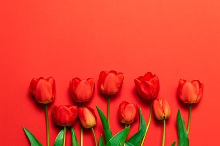 Spring concept. Red tulip bouquet on the red background with copy space.