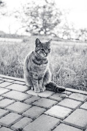 Gray street cat sits back outdoor in green grass