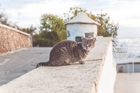 Gray street cat sitting on the ground on the sea coast