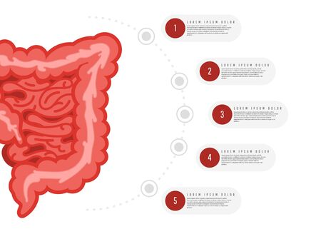 Medicine, biology concept infographics. Colon. Gastrointestinal tract. Vector illustration of human colon Illustration