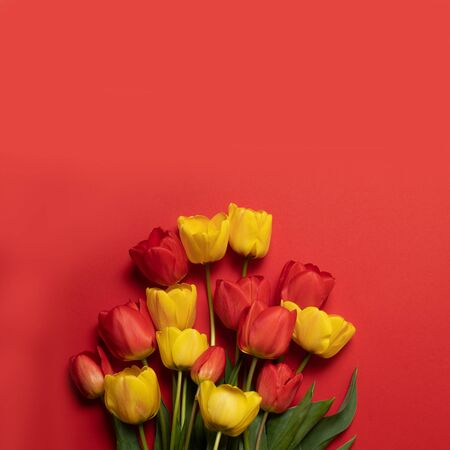 Congratulations on March 8, birthday, Valentines Day. Mix of spring tulips flowers on red background. Banco de Imagens