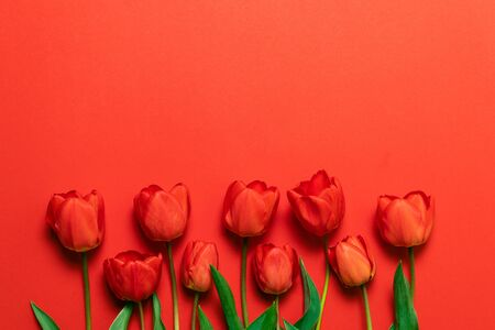 Congratulations on March 8, birthday, Valentines Day. Spring red tulips flowers on red background, top view. Space for text Banco de Imagens