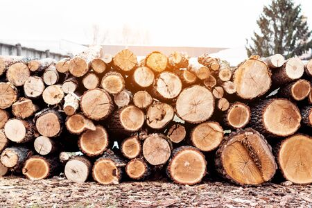 Wooden logs stacked. Wooden natural cut logs for harvesting for the winter.