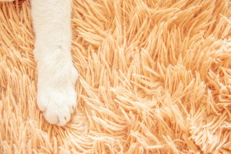 Closeup white cat paw in bed soft feeling holiday idea background.