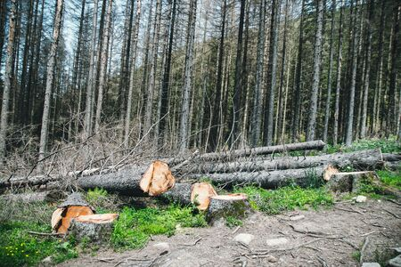 Ecological catastrophy. Photo of illegal logging. Environmental problem and danger