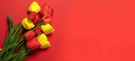 International Women Day on a red background. Creative concept of red and yellow tulips on a red background. Flat lay. Stock Photo