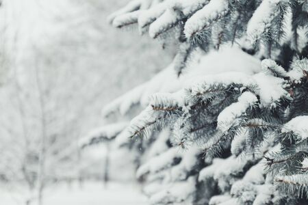 2020 Merry Christmas and happy New Year greeting background. Winter landscape with snow and christmas trees 版權商用圖片