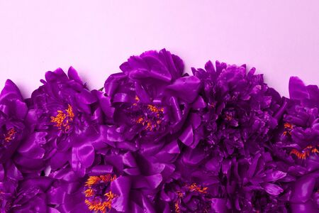 Minimal creative composition of many heads of beautiful fresh purple peonies on delicate background